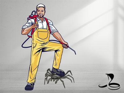 הדברת עכבישים מקצועית